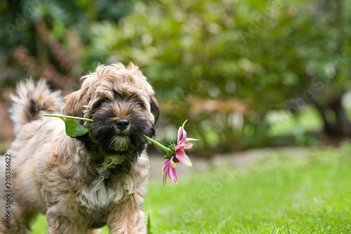 Foto Murales Niedlicher Welpe mit Blume im Maul