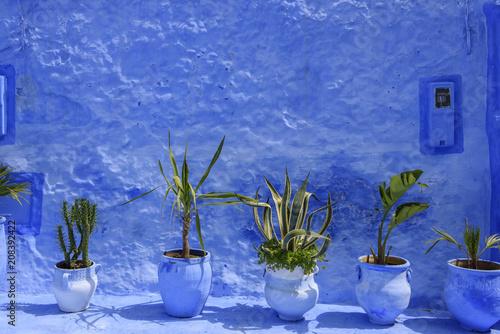 Fototapeta Line of green plant on a blue wall