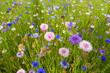 Leinwanddruck Bild - campo di fiori selvatici papaveri e fiordalisi
