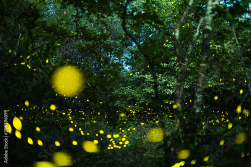 Fotobehang Thailand Firefly flying at night in the forest