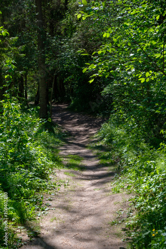 Fotobehang Zwart empty gravel road in the countryside in summer heat