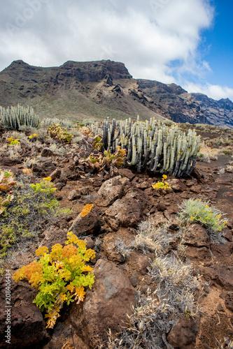 Canvas Honing Cactus y flores con acantilados Los Gigantes al fondo, Punta del Teno, Tenerife, Islas Canarias, España