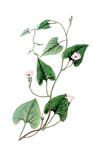 Illustration of plant - 208408467