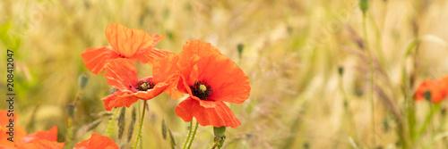 Aluminium Klaprozen red poppy flower field panorama