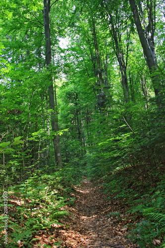Fotobehang Weg in bos Wiosenny las, puszcz, szlak pieszy