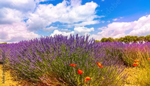 Aluminium Lavendel Champ de lavande dans le sud de la France