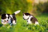 Im Gras sitzende Katze dreht sich zu einem Welpen um - 208434432