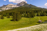 Field with white poet's narcissus and green juicy grass on a spring sunny day.Blaa-Alm, Styria, Austria. - 208437257