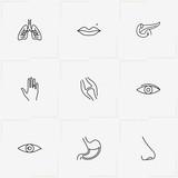 Human Anatomy line icon set with hand, eye and retina - 208446647