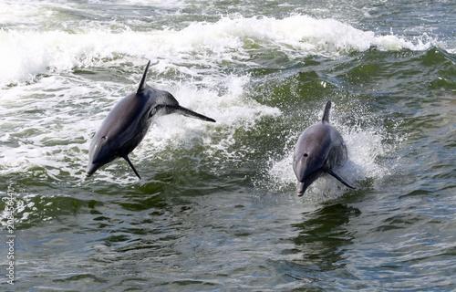 Aluminium Dolfijn Two dolphin jumping in the surf