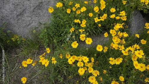 Foto Murales 꽃