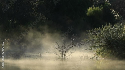 Scenic landscape of drifting mist over water at sunrise, South Africa
