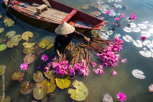 Fotobehang Landschappen Yen river with rowing boat harvesting waterlily in Ninh Binh, Vietnam