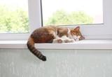 Cat on the window sill - 208481005