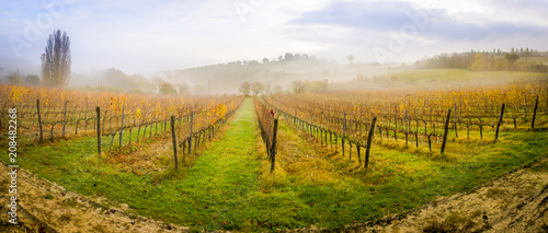 Canvas Blauwe hemel Tuscan vineyard in the morning