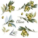 Set of vector olive plants for design - 208486247