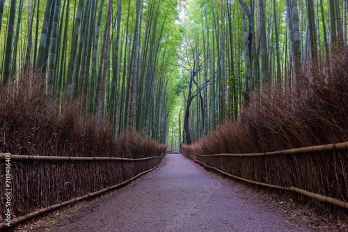 Arashiyama Bamboo Forest in Kyoto Japan. Beautiful bamboo background with natural scene. © nonchanon