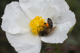 collecting pollen - 208487405