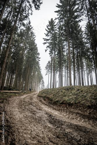 Fototapeta Landschaft des Teutoburger Wald