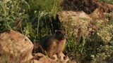 Marmot - 208496458