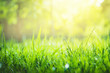 Green grass background with copy space. Summer nature landscape