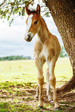 a young sport foal standing free on a spring meadow - 208528210