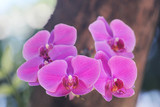 orchid flowers typical of Indonesia