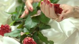 Red roses and female manicured hands. Elderly woman hands with perfect red manicure and jewelry. Red fresh flowers on white silk. Elegance and perfection concept. - 208539661