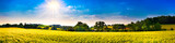 Panorama of a landscape with fields, meadows, trees and sun - 208544449