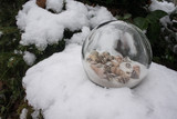 Tropical shell sphere in snow - 208553853