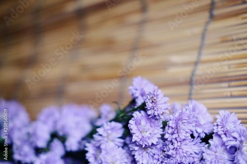 Purple Marguerite daisy flowers on Bamboo weave background.Ultra violet for 2018.copy space
