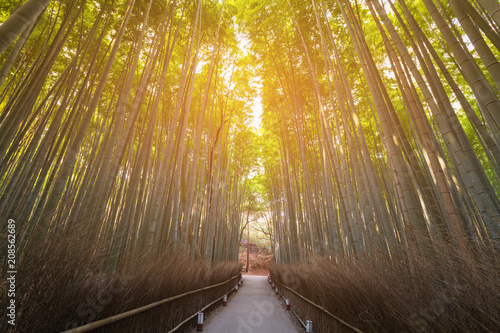Fotobehang Bamboe Walking way over Bamboo forest Kyoto Japan, natural landscape background