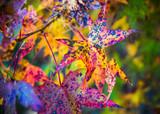 Closeup shot of colorful fall foliage - 208573009