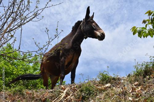 Fotobehang Paarden china