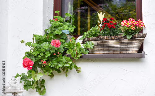 Fenster Blumen im Sommer