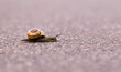 Closeup of a snail - 208586832