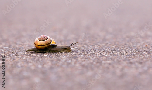 Closeup of a snail