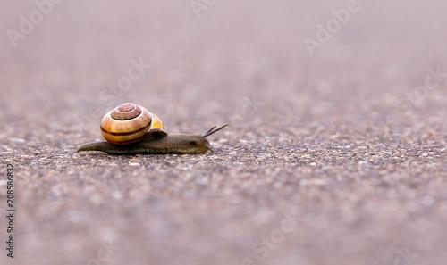 Naklejka Closeup of a snail
