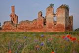 Fototapeta Maki - Malownicze ruiny średniowiecznego zamku na tle błękitnego nieba, na pierwszym planie, rozmyte, polne, kolorowe kwiaty, poruszane przez wiatr © Wioletta