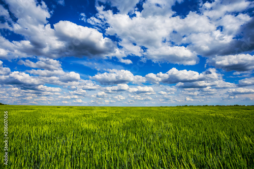 green summer rural field under a blue cloudy sky, village outdoor scene