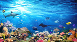 Underwater Scene With Coral Reef And Exotic Fishes - 208616276