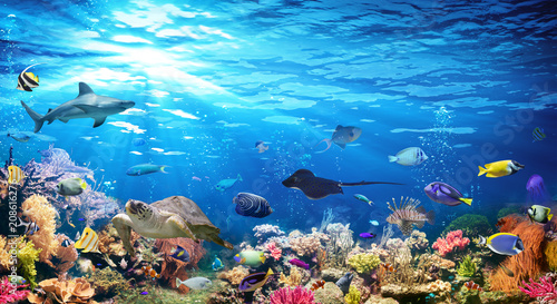 mata magnetyczna Underwater Scene With Coral Reef And Exotic Fishes