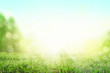 Leinwanddruck Bild - Gras im Frühling