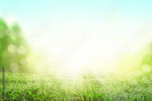 Leinwanddruck Bild Gras im Frühling
