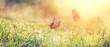 Leinwanddruck Bild - Wunderschöne Schmetterlinge