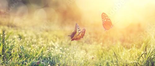 Leinwandbild Motiv Wunderschöne Schmetterlinge