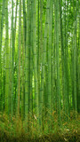 Ggreen bamboo plant forest in Japan zen garden © Andy