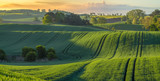 high resolution panorama of the spring field of young green cereal illuminated by the first rays of the rising sun