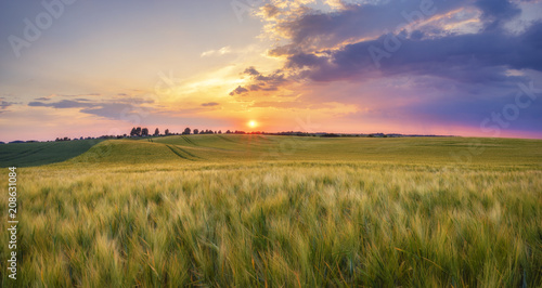 sunset over the spring field - 208631084