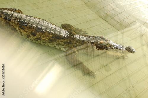 Fotobehang Thailand Frightening crocodiles at farm in Thailand